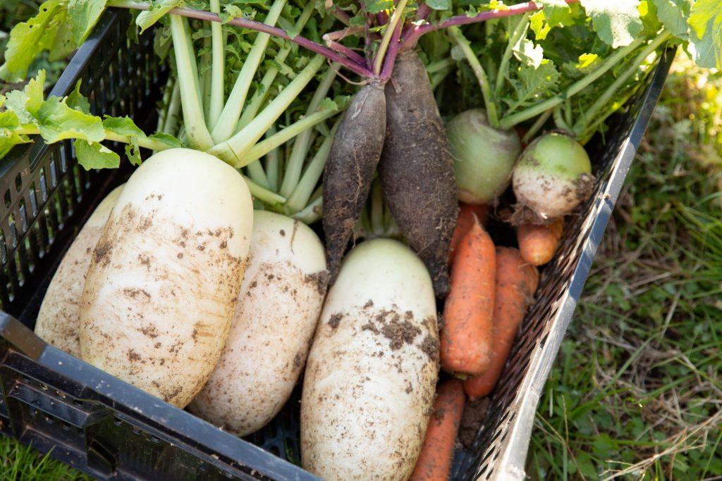 料理 食事 野菜は美味しい